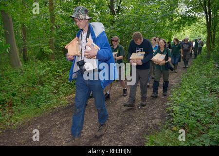 Siebenschläfer Züchter, Wildlife Trust Personal und Freiwillige Kisten nest Hazel haselmäuse (Muscardinus avellanarius) für eine Wiedereinführung, Notts, Großbritannien Stockbild