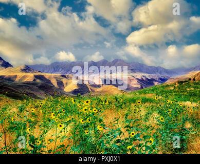 Gewitterwolken und Gänseblümchen. Hells Canyon National Recreation Area. Oregon. Stockbild