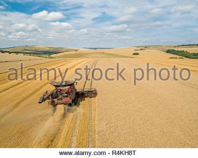 Ernte Antenne von Mähdrescher schneiden Sommer Weizenfeld Ernte mit Traktor Anhänger auf Bauernhof Stockbild