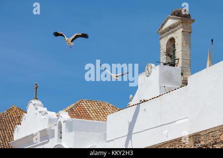 Portugal - Algarve - Störche über Faro - Europa Stockbild
