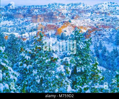 Schneebedeckte Bäume und Snowy, Wildcat Hills State Reserve, Nebraska, in der Nähe von Scottsbluff Stockbild