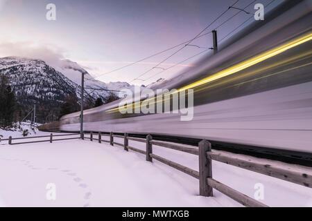Bernina Express in der schneebedeckten Landschaft, Morteratsch, Engadin, Kanton Graubünden, Schweiz, Europa Stockbild