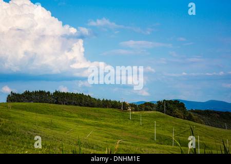 Bäume auf eine Landschaft, Volterra, Provinz Pisa, Toskana, Italien Stockbild