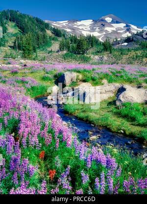 Lupine und kleinen Bach mit North Sister Mountain. Drei Schwestern Wüste, Oregon Stockbild