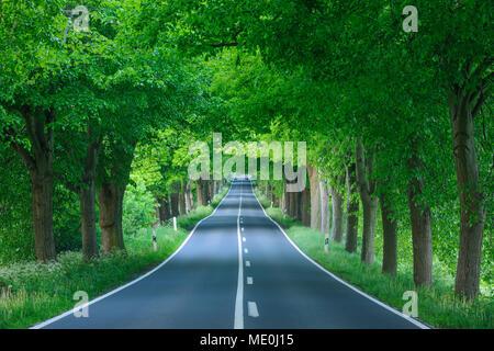 Von Bäumen gesäumten Straße im Schatten mit Linden im Frühjahr auf der Insel Rügen in Mecklenburg-Vorpommern, Deutschland Stockbild