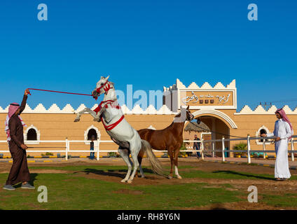 Arabian Horse Zucht in alhazm Stud, Provinz Najran, Khubash, Saudi-Arabien Stockbild