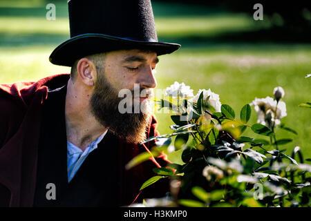 Regency gekleideter Mann weiße Rosen riechen Stockbild