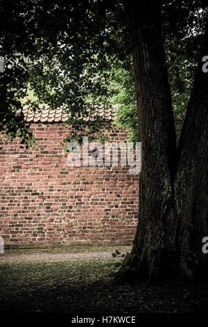 Roten Backsteinmauer und alten Baum im leeren Park. Ruhigen und ruhigen Architektur Hintergrund. Stockbild