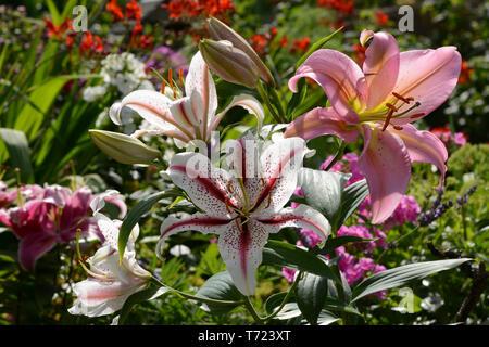 Blumen 677 Stockbild