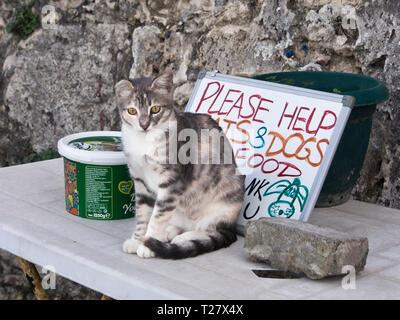 Die für Lebensmittel Hilfe für herrenlose Hunde und Katzen in der türkisch-zypriotischen Stadt Girne (Kyrenia) Stockbild