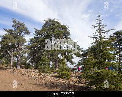 Besuch oder die Teilnahme an einer Wanderung im Troodos-Gebirge auf Zypern können Touristen Wälder aus Pinien und Zedern und herrlichem Blick Erfahrung Stockbild