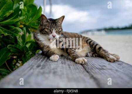 Porträt von Katze auf Holzbrett am Strand Stockbild