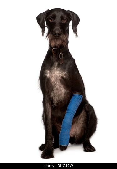 Bein gips hund gebrochen Duschen mit