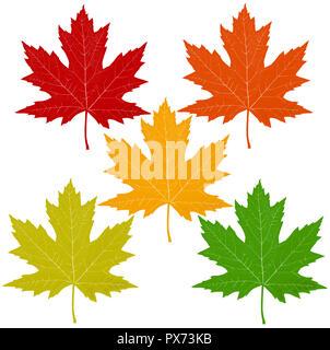 Hojas de otoño con una hoja de arce rojo anaranjado amarillo verde incluyendo símbolos como un concepto temático de temporada como un icono de otoño en blanco. Imagen De Stock