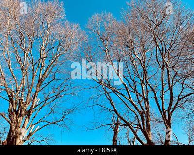 Ángulo de visión baja de los árboles en primavera, Italia Imagen De Stock