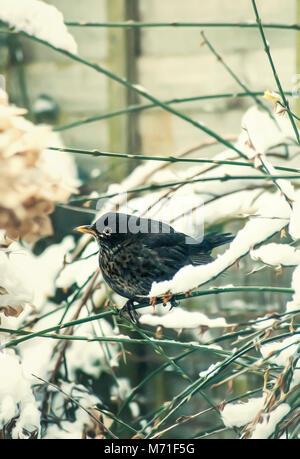 Las aves que se alimentan en el jardín de invierno Imagen De Stock