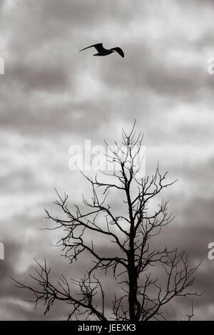 Pájaro volando sobre árbol muerto en silueta. Cielo oscuro y ominoso. Naturaleza misteriosa y dramática Imagen De Stock