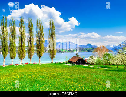 Lago de Lucerna con Isoli park. Personas relajante enyoing la primavera. Imagen De Stock