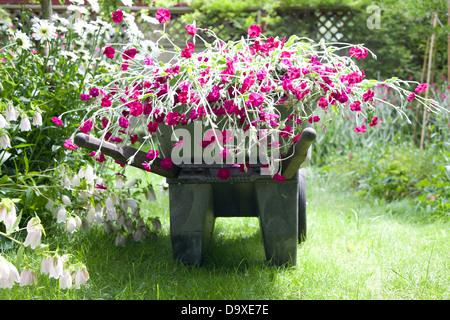 Carretilla de mano lleno de flores en el jardín Imagen De Stock