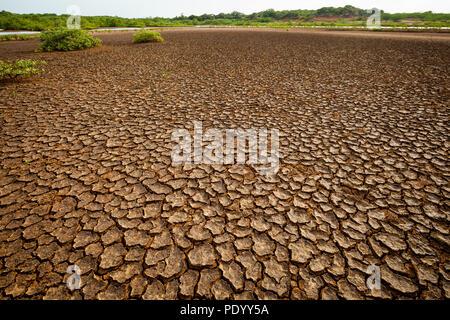 La tierra seca y agrietada en el desierto del Parque Nacional Sarigua, provincia de Herrera, República de Panamá. Imagen De Stock