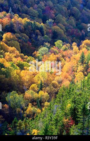 El follaje de otoño en el monte Madison en New Hampshire's White Mountain National Forest. Vista de la cúpula de la roca. Imagen De Stock
