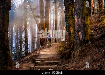Único excursionista subiendo escaleras de madera en los bosques de Langtang valle. Imagen De Stock
