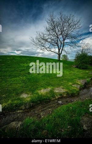 Un desolado, muerto en busca de árboles solitarios, se erige sobre una colina de césped verde y exuberante Imagen De Stock