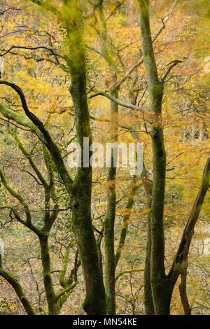 Colores de otoño en el valle de Conway, Snowdonia, Gales, Reino Unido Imagen De Stock