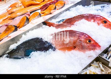 Variedad de pescados crudos y frescos conservados en hielo Imagen De Stock