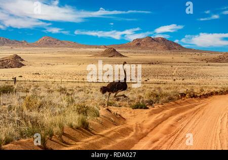 Namibia paisaje con familia de avestruces cruzando la carretera roja de arena Imagen De Stock