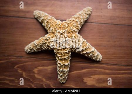 Una estrella de mar sobre madera Imagen De Stock