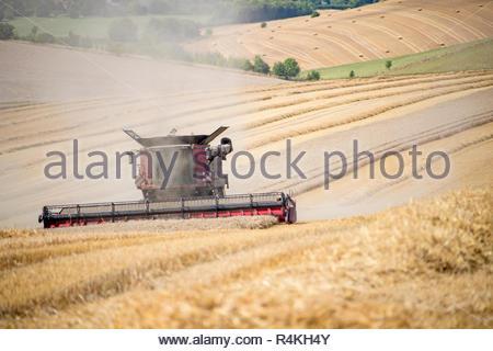 Vista de la cosecha de trigo de verano de corte de la cosechadora en la granja de cultivo de campo Imagen De Stock