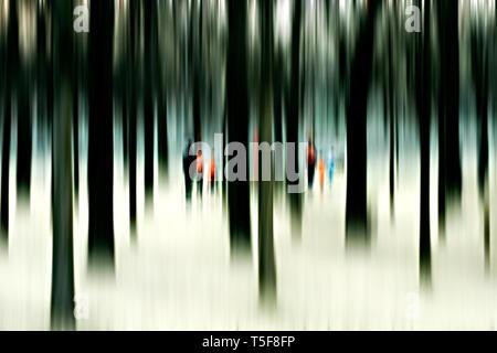 Un bosque con troncos de árbol que de pie juntos en el invierno. El sol se rompe a través de los árboles. Imagen De Stock