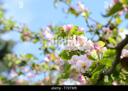 Primavera 353 Imagen De Stock