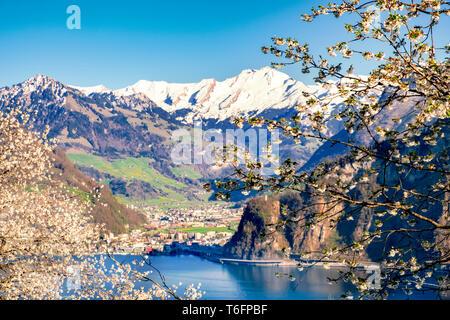 Lago de Lucerna con montañas cubiertas de nieve en primavera con flores de Apple en primer plano Imagen De Stock