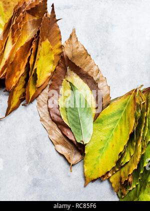 Hojas en tonos de otoño Imagen De Stock