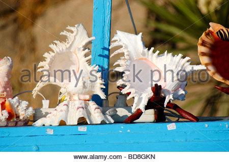 Conchas de Mar en venta en Mykonos, Grecia Imagen De Stock