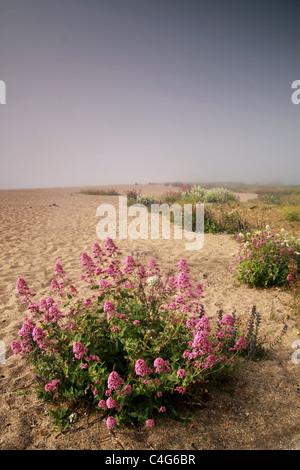 Flores en una playa de arena Imagen De Stock