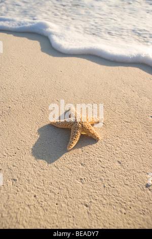 Una estrella de mar en la playa Cable Beach, Nassau, Las Bahamas, El Caribe Imagen De Stock