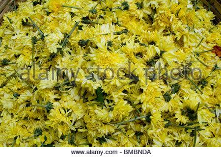 Visualización de flores para la venta en Trivandrum Imagen De Stock