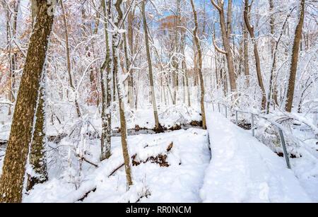 Camino a través del bosque cubierto por una espesa capa de nieve Imagen De Stock