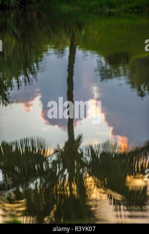 De Hanalei Bay, Hawai, Kauai Kauikeolani Estate, reflejo de palmeras. Imagen De Stock