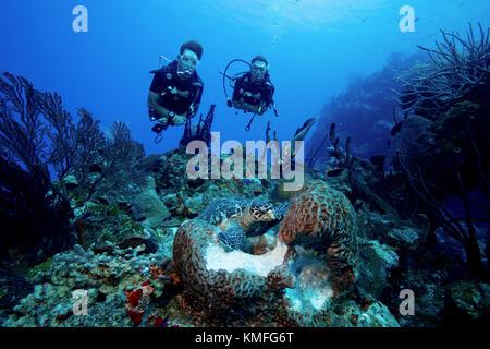 Los buceadores ver la interacción de diferentes especies de vida marina, tienen acceso a la misma fuente de Imagen De Stock