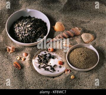 Todavía la vida marina de roble Imagen De Stock