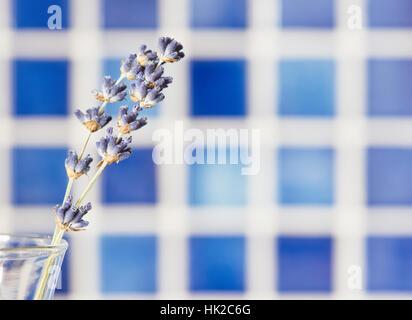 Flores de lavanda en jarrón de cristal con fondo azul. Aún la flor de la vida. Imagen De Stock