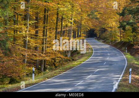 Camino en un bosque en otoño en Spiegelau en el Parque Nacional del Bosque Bávaro en Baviera, Alemania Imagen De Stock