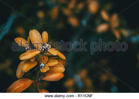 Hermosa cerca de una planta con flores de naranja Imagen De Stock