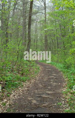 Remanente de la Wilderness Road en Levi Jackson State Park, Kentucky. Fotografía Digital. Imagen De Stock