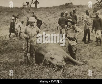 Theodore Roosevelt y hombre no identificado de pie encima de un muerto de hipopótamo. En el fondo hay trabajadores Imagen De Stock