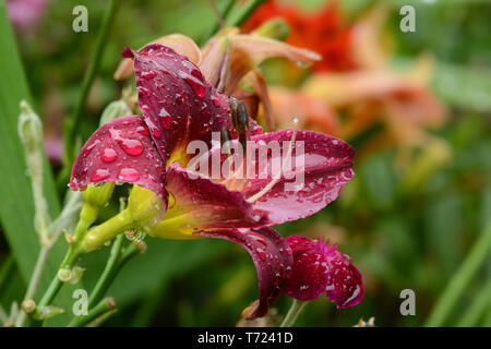 Flores 850 Imagen De Stock